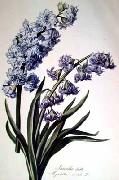 Cornelis van Spaendonck Prints Hyacinth oil painting reproduction