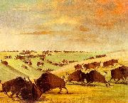 George Catlin Buffalo Bulls Fighting in Running Season-Upper Missouri oil painting reproduction