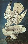 John James Audubon White Gerfalcons USA oil painting reproduction