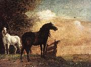 Horses in a Field zg, POTTER, Paulus