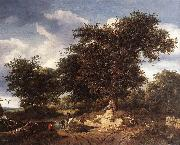 RUISDAEL, Jacob Isaackszon van The Great Oak af oil painting