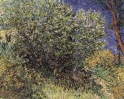The Bush, Vincent Van Gogh