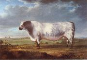 Thomas Alder A Prize Bull oil painting