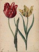 Two Tulips, Georg Flegel
