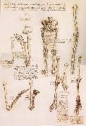 Anatomical studies of the basin of the Steibeins and the lower Gliedmaben of a woman and study of the rotation of the arms, LEONARDO da Vinci