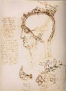 Anatomical study of the brain and the scalp, LEONARDO da Vinci