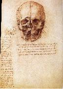 Anatomy of the Schadels, LEONARDO da Vinci