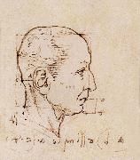 Study of the proportion of the head