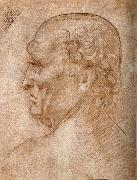 Master of the Pala Sforzesca, profile of an old man, LEONARDO da Vinci