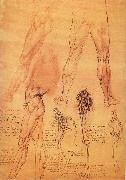 Muscles and bone of leg and Hufte, LEONARDO da Vinci