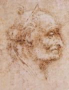 Aurelio Luini attributed, profile of an old man, LEONARDO da Vinci