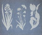 Hyacinth,Cornflower,Tulip
