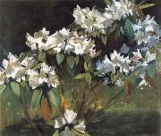 William Stott of Oldham White Rhododendrons