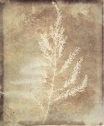Willim Henry Fox Talbot Photogenetic Drawing oil painting