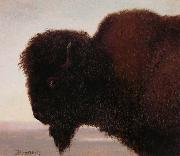Albert Bierstadt Buffalo Head oil painting reproduction