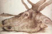 The Head of a stag Killed by an arrow, Albrecht Durer