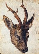 The Head of Stag, Albrecht Durer