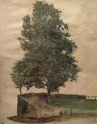 Linden Tree on a Bastion