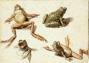 Four Studies of Frogs