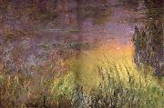 Water Lilies at Sunset, Claude Monet