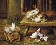 Two Rabbits and three pigeons 069