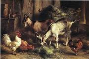 poultry  160