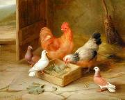 poultry  141