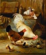 Poultry 091