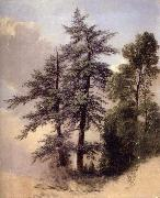 Study from Nature Trees,Newburgh,