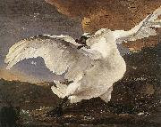 The Threatened Swan before 1652, ASSELYN, Jan