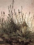 The Large Turf, Albrecht Durer