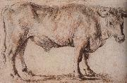 Bull, Peter Paul Rubens