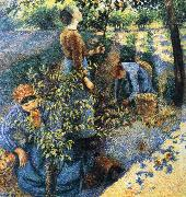Apple picking, Camille Pissarro