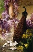 Eugene Bidau A Peacock and Doves in a Garden oil painting artist