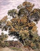 Thomas frederick collier Study of an Oak Tree oil painting