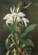 unknow artist Orquideas oil painting reproduction