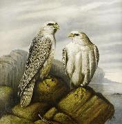 Gyr falcons on a rocky ledge
