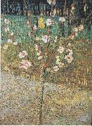 Flowering almond tree, Vincent Van Gogh