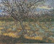 Flowering orchard with apricot-trees, Vincent Van Gogh