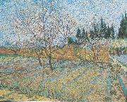 Flowering orchard with peach-trees, Vincent Van Gogh