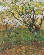 Flowering Orchard, Vincent Van Gogh