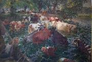 Cows crossing the Lys River