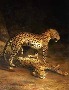 Two Leopards Lying in the Exeter