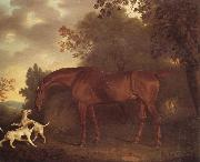 Clifton Tomson A Bay Hunter and Two Hounds in A Wooded Landscape