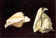 Two Shells