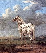 POTTER, Paulus The Piebald Horse