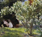 Peder Severin Kroyer Roses Garden in Skagen (nn02) oil painting