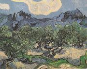 Olive Trees with the Alpilles in the Background (nn04), Vincent Van Gogh