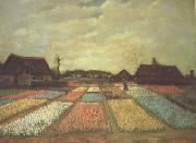 Vincent Van Gogh Bulb Fields (nn04) oil painting reproduction