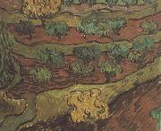 Olive Trees against a Slope of a Hill (nn04), Vincent Van Gogh
